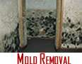 Mold Removal Winnetka