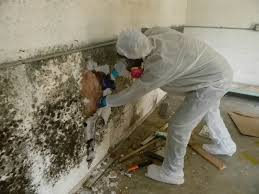 mold removal Barrington Hills