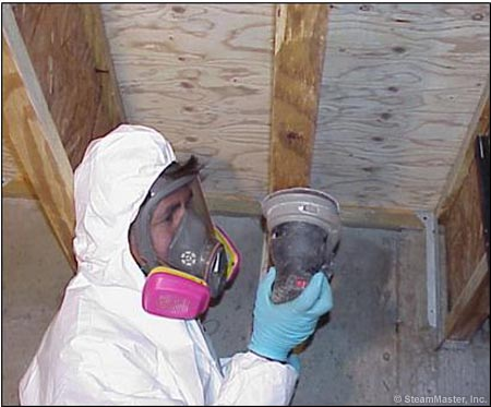 mold remediation Barrington Hills