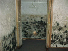 Mold Remediation Glenview